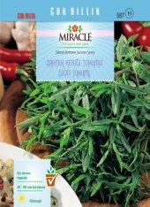 Miracle Zahter Kekiği Tohumu (200 Tohum) 20 Adet