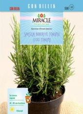 Miracle Saksılık Biberiye Tohumu (100 Tohum) 50 Adet