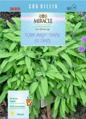Miracle Eczane Adaçayı Tohumu (50 Tohum) 20 Adet