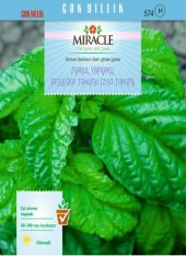 Miracle Marul Yapraklı Fesleğen Tohumu (250 Tohum) 1 Adet