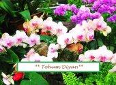 Beyaz Pembe Orkide Tohumu 10+tohum ******