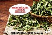 Oğul Otu Melisa (Kokusuz) 150 Gr Doğal Taze