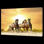 Atlar Digital Baskı Kanvas Tablo 60 X 90 Cm