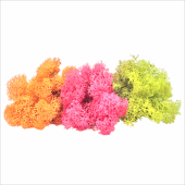 Bigpratic Teraryum Malzemeleri Renkli Sphagnum Yosunu Moss Yosun