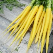 Süper Paket 500 Adet Tohum Nadir İthal Sarı Havuç Tohumu + Süpriz