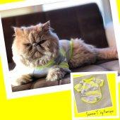 Fosforlu Sarı Oval Yaka Tişört Summer T By Kemique Kedi Kıyafet