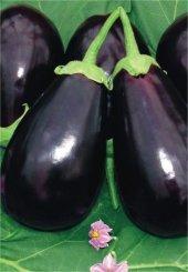 Siyah Topan Patlıcan