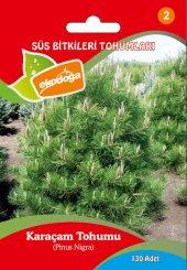 Karaçam Tohumu Pinus Nigra Tohumu Çam Tohumu Karaçam Tohumu 1 Paket (130 Adet) Pinus Nigra Tohumu