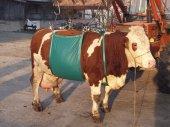 Sığır Kaldırma Aparatı