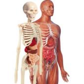 Clementoni İlk Keşiflerim İnsan Anatomisi 64297clementoni İlk Ke