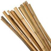 Bambu Cubuk 210 Cm 16 18 Mm 50 Adet Bambu Bitki Destek Çubuğu Dekoratif Bambu Çubuk