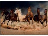 1000 Parça Puzzle Hobi Eğitim Dünyası Renkli Atlar