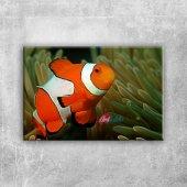 Renkli Balık Hayvanlar Kanvas Tablo Art Tablo