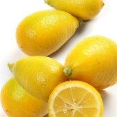 Limequat Nadir Çeşit 6 Yaş Saksılı