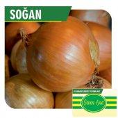 Fide Sepeti Soğan (Hazar) Tohumu 10grlık 1 Paket