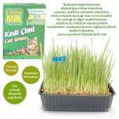 Gardenmix Kedi Çimi Küçük Boy 13x18 Cm