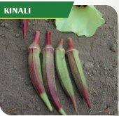 Fide Sepeti Bamya (Kınalı) Tohumu 25grlık 1 Paket