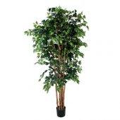 Euro Flora Yapay Fıcus Ağacı Brezilya 210 Cm